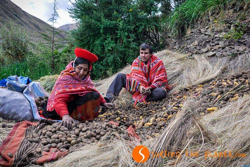 Potato selection in Patacancha