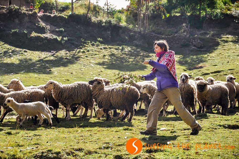 The newest shepherd of Patacancha