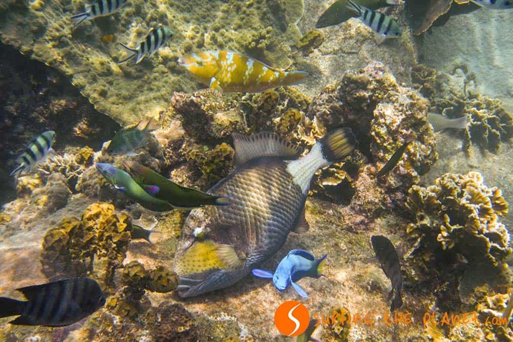 Színes trópusi halak Ko Tao