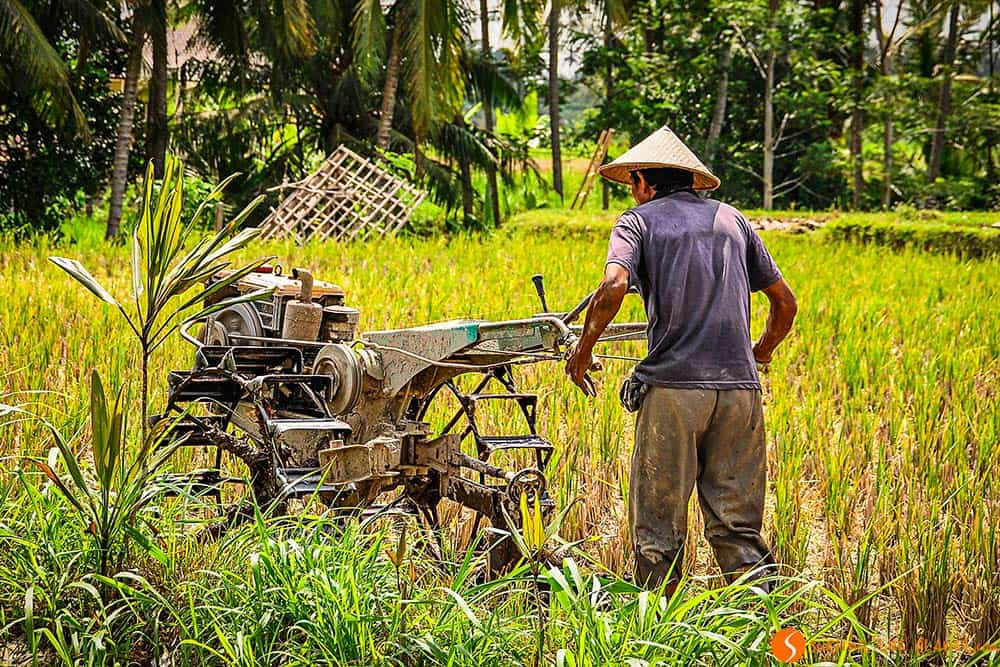 Man working in a rice field in Bali