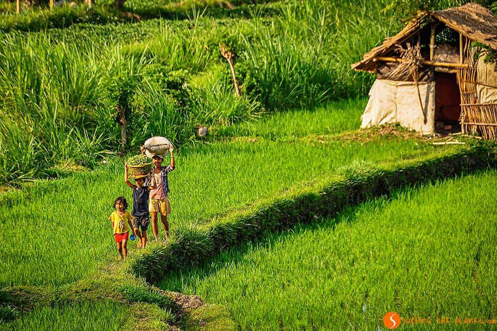 Bali Rice Fields - A family close to Tirta Gangga