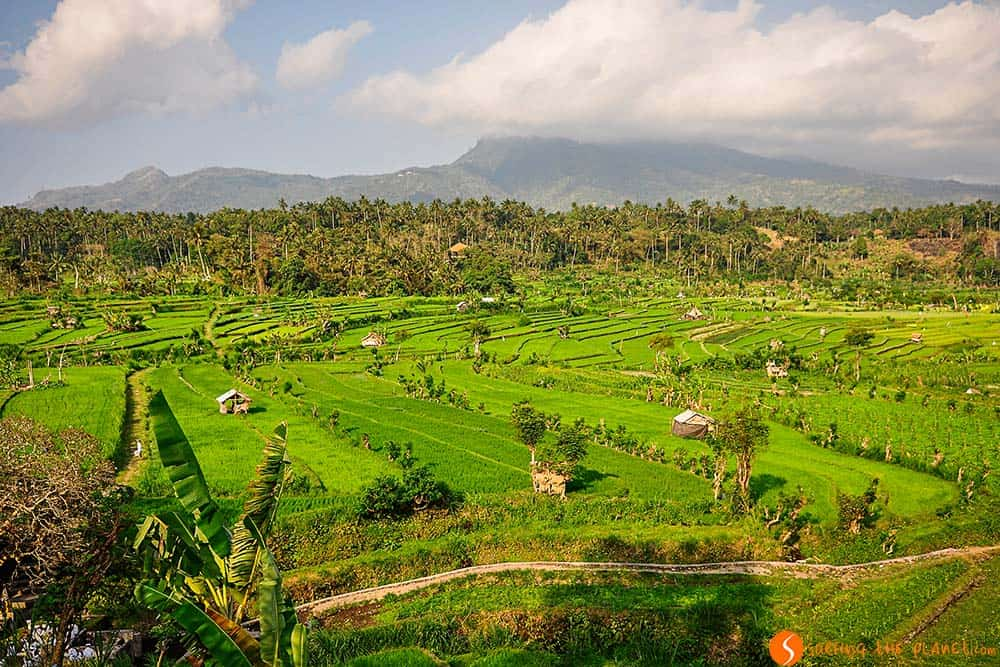 Rice Fields in Bali - Tirta Gangga