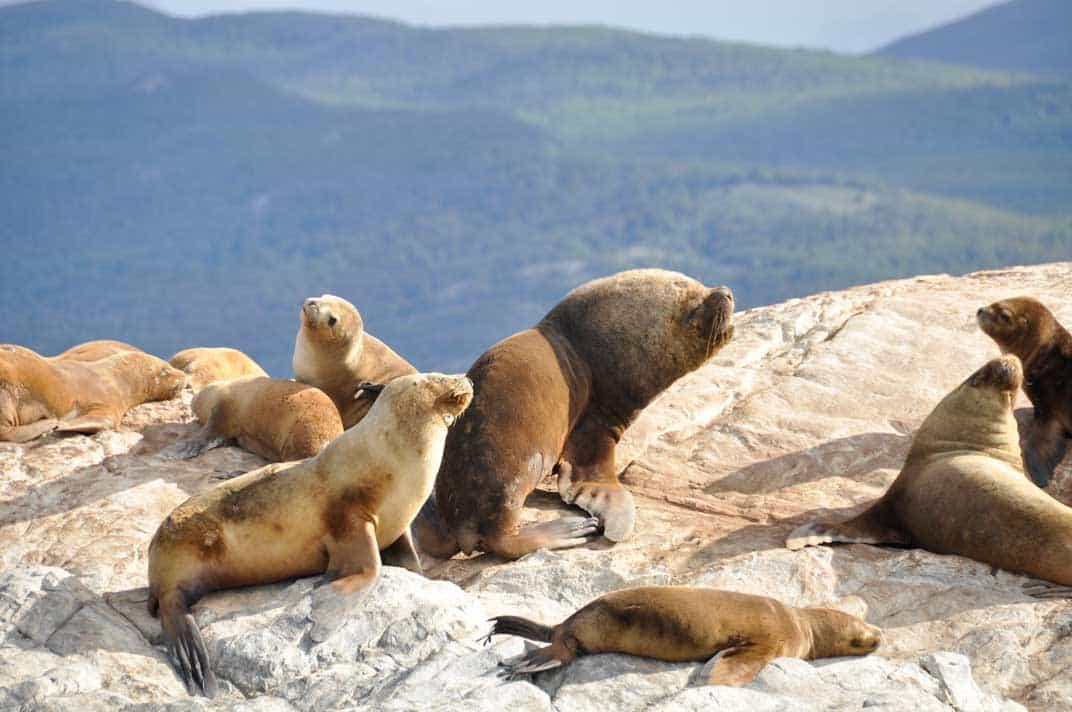 Leoni Marini nel canale Beagle | Viaggio in Patagonia