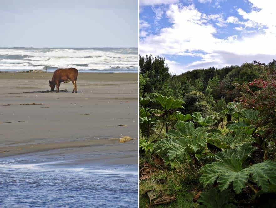 Parque Nacional de Chiloé, Isla Chiloé, Chile