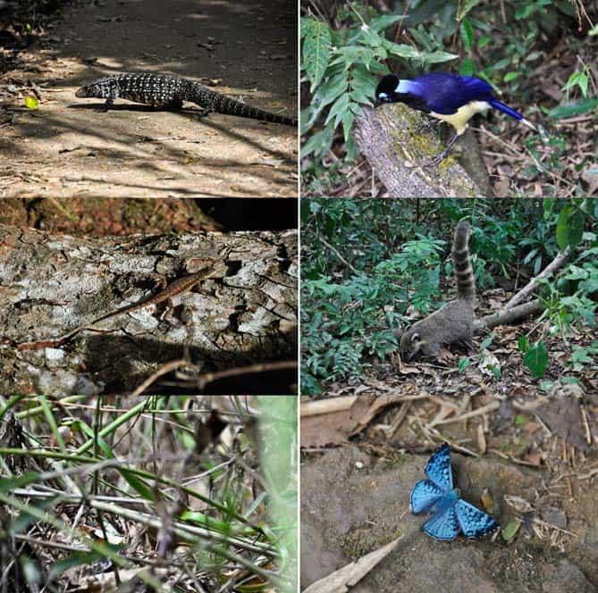 Animali a Iguazú