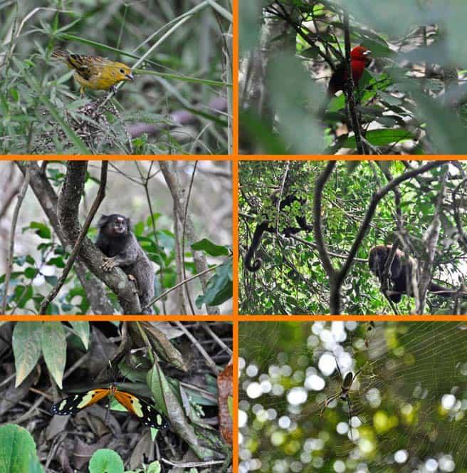 Animales en Ilha Grande, Brasil