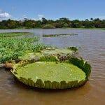 Aventuras en la Amazonia, la selva más grande del mundo