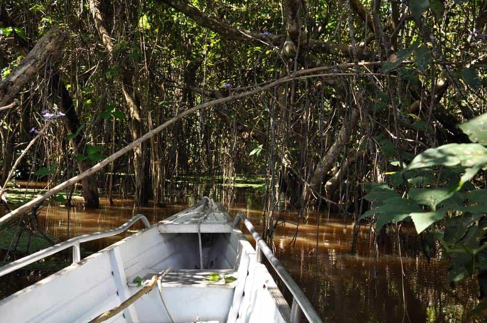 Az esős évszakban elárasztott őserdő Santarémben