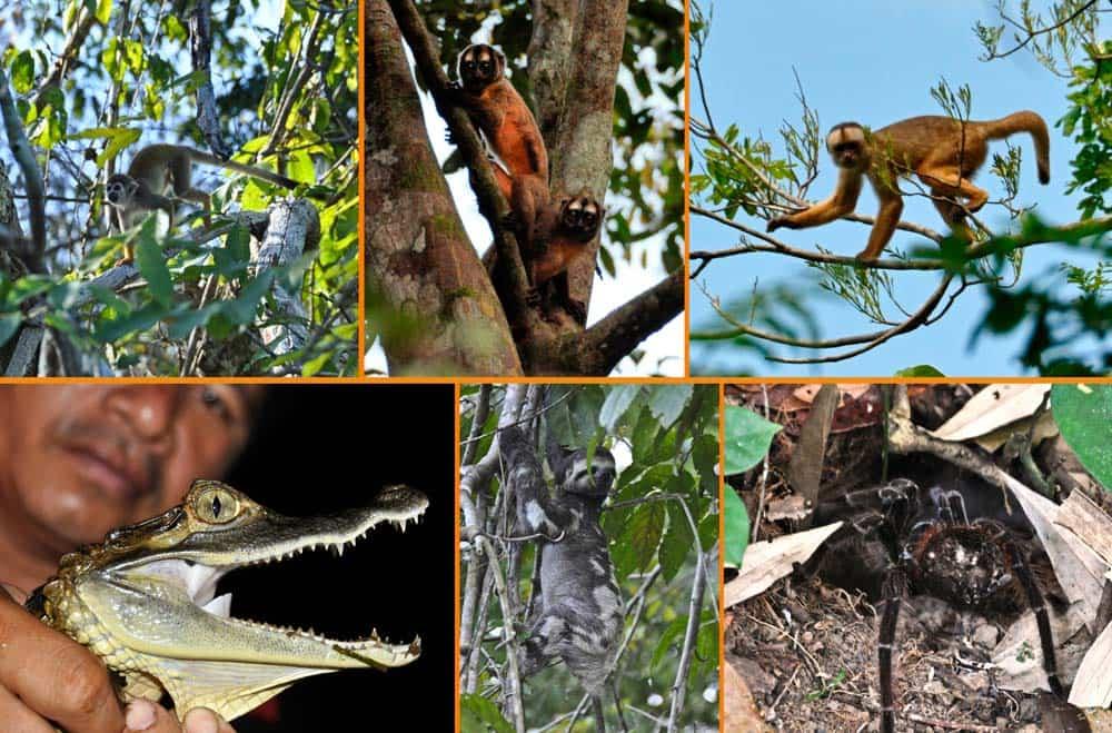 animali della foresta amazzonica