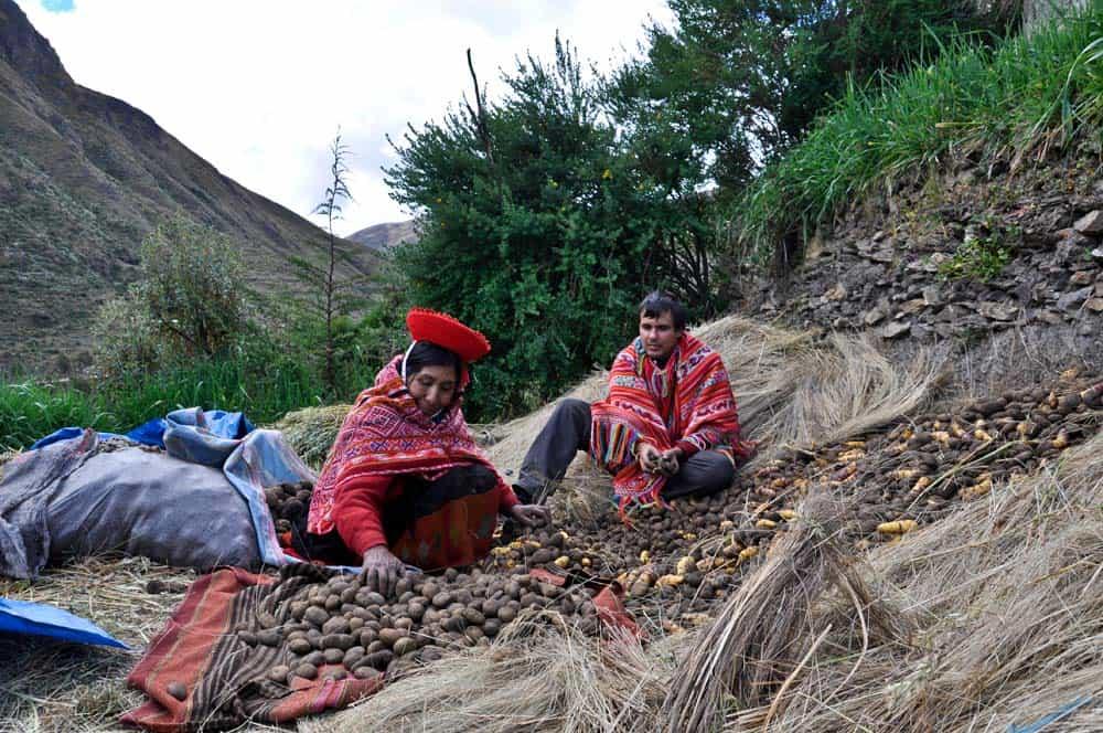 Krumpliválogatás egy kecsua közösségben, Patacancha