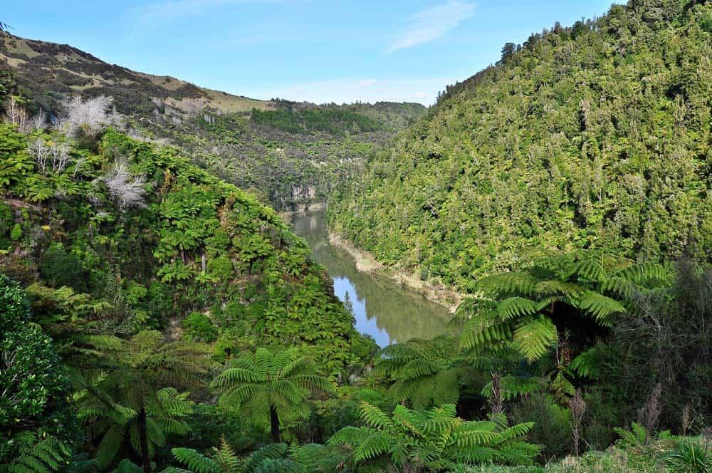 fiume Whanganui | Viaggio in Nuova Zelanda