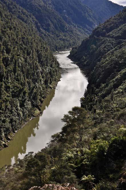 Panorama fiume Whanganui | Viaggio in Nuova Zelanda