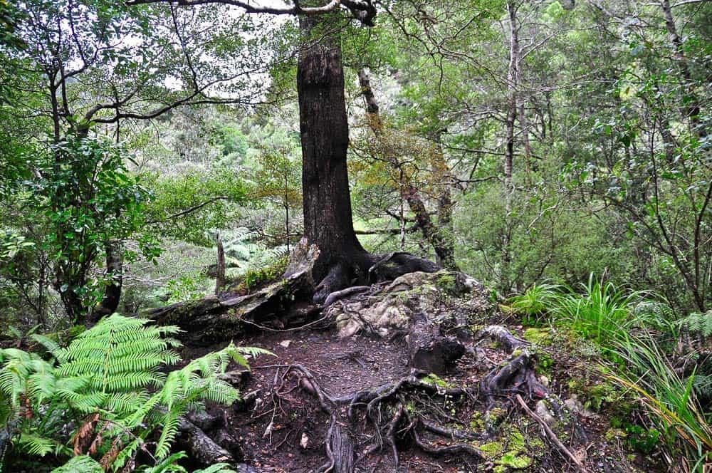 Paesaggio di Rivendell a Wellington | Viaggio in Nuova Zelanda