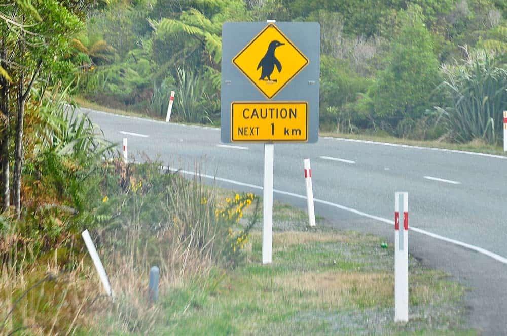 Cartello stradale attenzione pinguini | Viaggio in Nuova Zelanda
