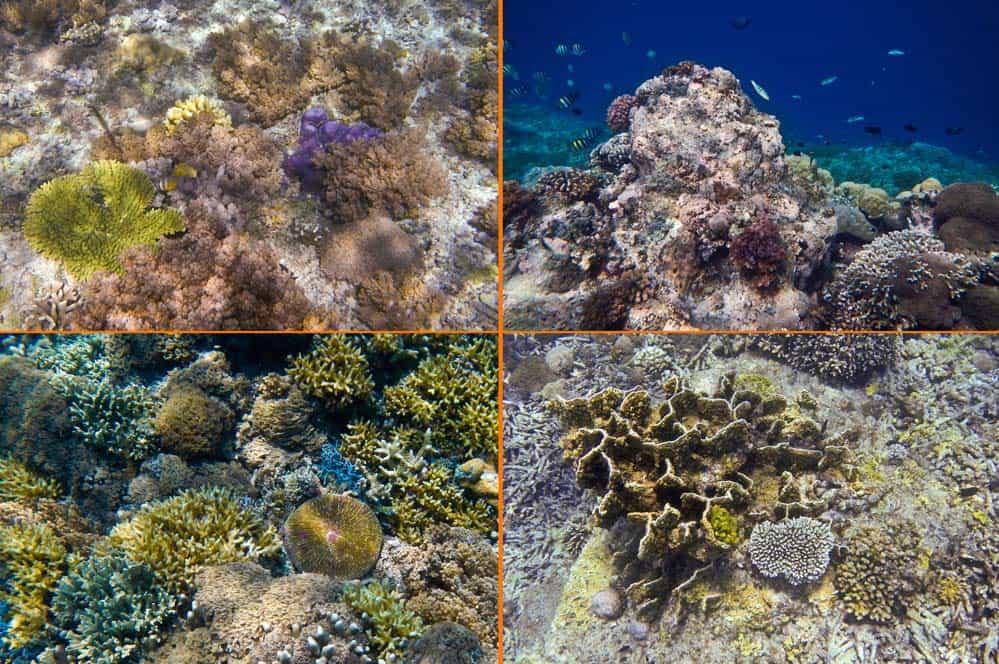 Barriera corallina a Gilli Meno | Viaggio Indonesia