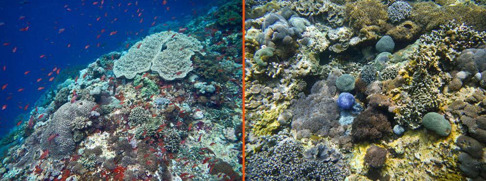 Snorkelling barriera corallina (the wall point) isola di Lembongan Bali | Viaggio Indonesia