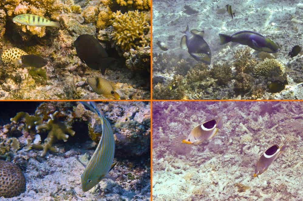 Pesci nella barriera corallina a Gilli Meno | Viaggio Indonesia