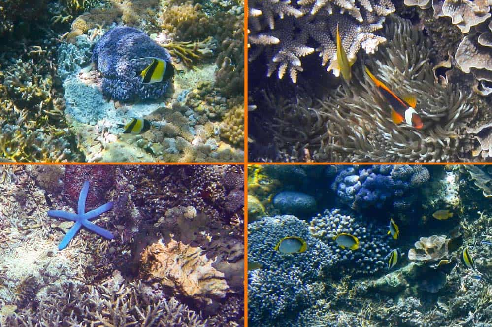 Snorkelling barriera corallina isola di Lembongan Bali | Viaggio Indonesia