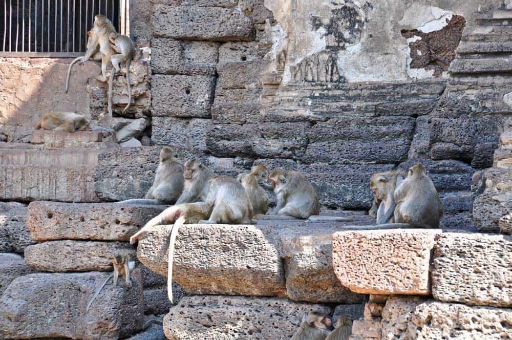 Monos en Prang Sam Yot, Lopburi, Tailandia