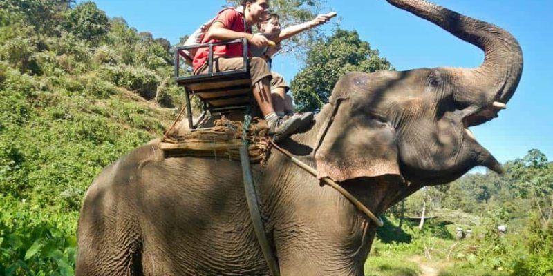 Dando platanos al elefante