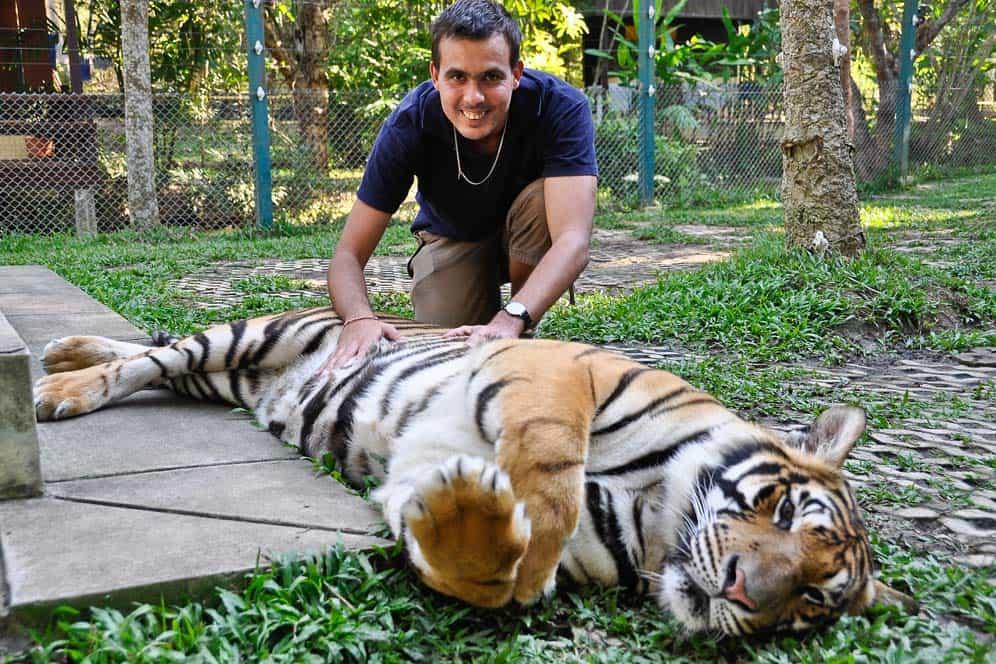 Con los tigres en el Tiger Kingdom Chiang Mai