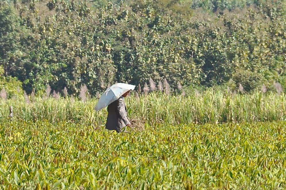 Campagna di Muang Sing in Laos