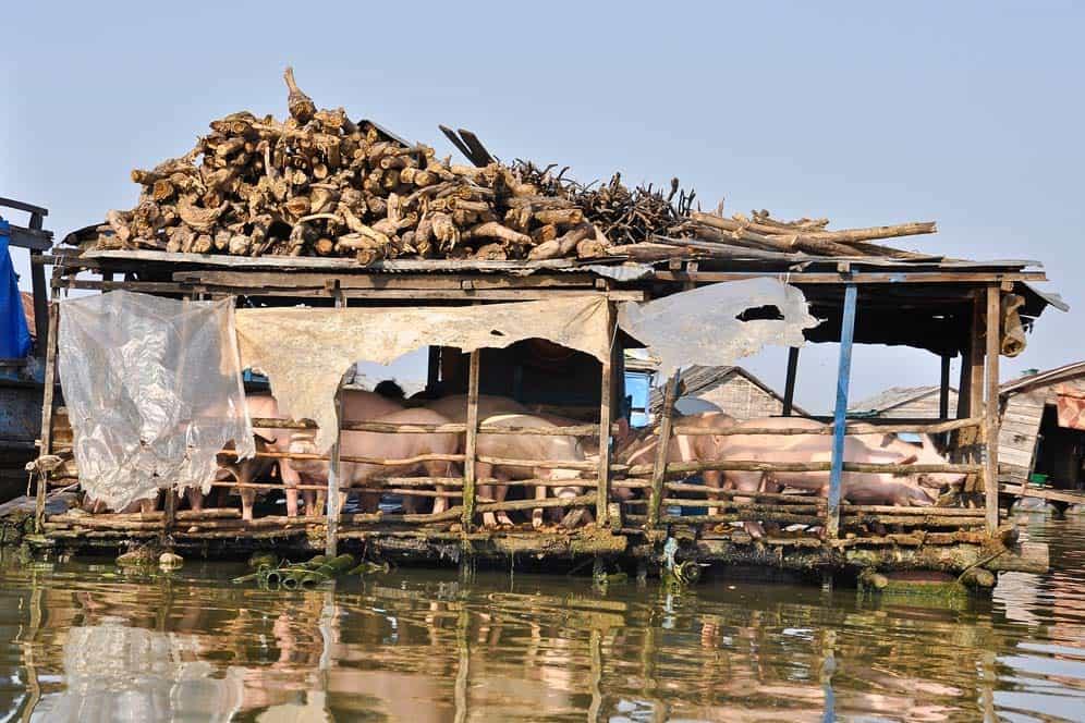Granja flotante - Kompong Luong Camboya