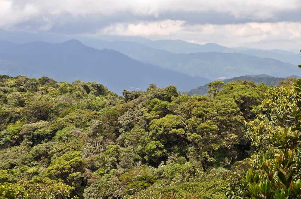 Panorama dal Gunung Brinchang, trekking a Cameron Highlands | Viaggio in Malesia