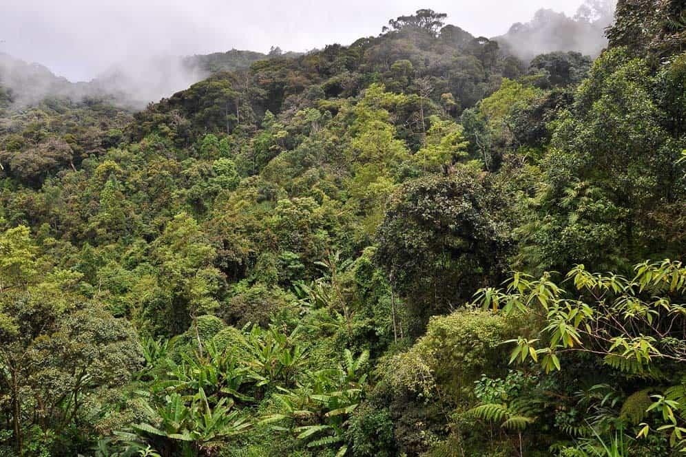 Foresta Gunung Brinchang Cameron Highlands | Viaggio in Malesia