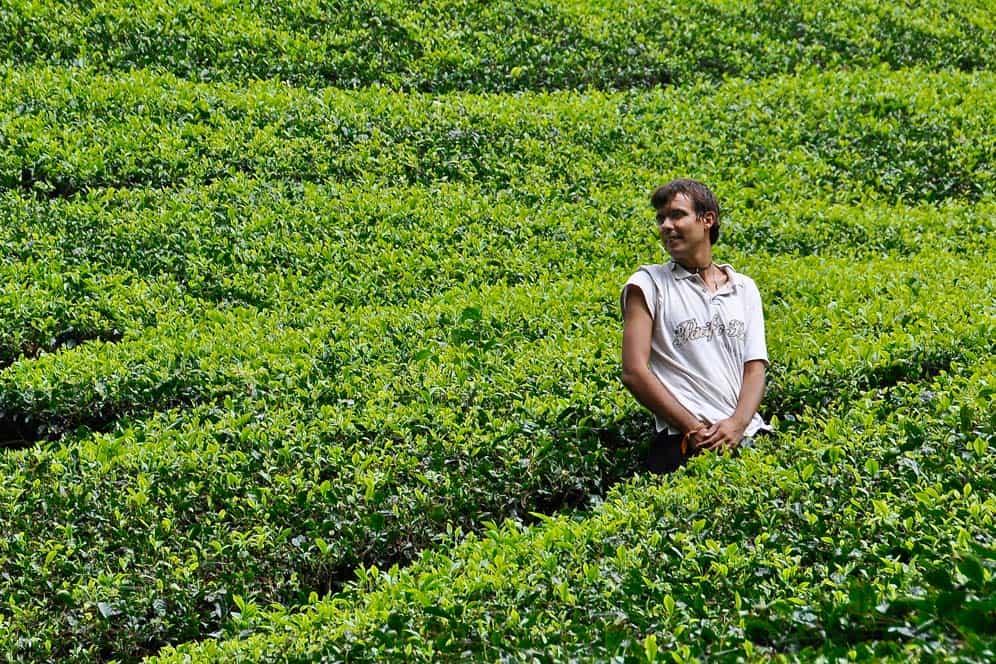 Gábor e le piantagioni di tè a Cameron Highlands | Viaggio in Malesia