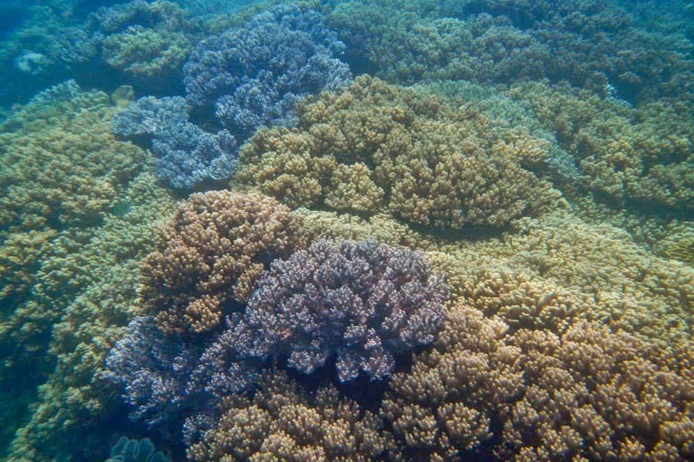 Coralli nell'isola Apo| Viaggio Filippine