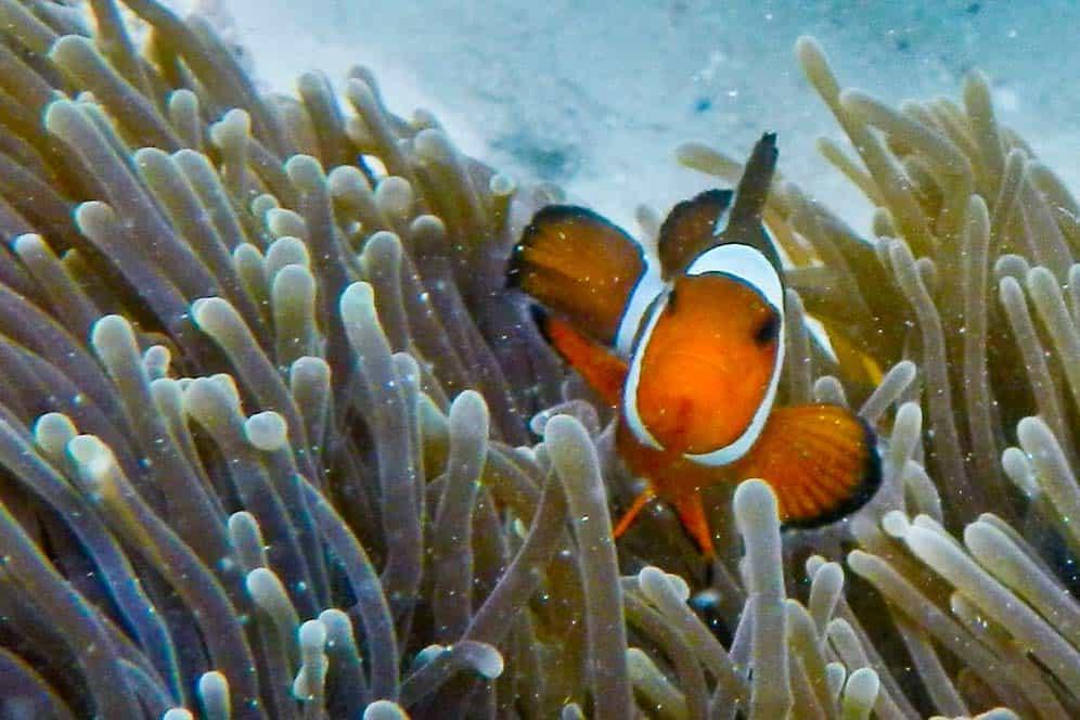 Nemo, Koh Lipe, Tailandia