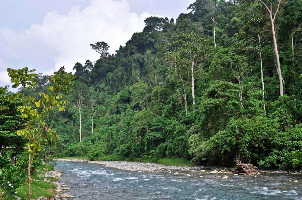 Tranquillitá sul fiume a Bukit Lawang | Viaggio Indonesia