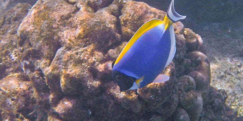 Pesce colorato nel fondale dell'isola di Pulau We | Viaggio Indonesia