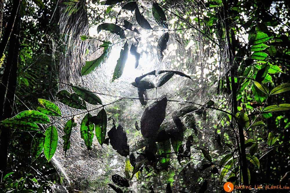 Tela de araña - Viaje al Amazonas