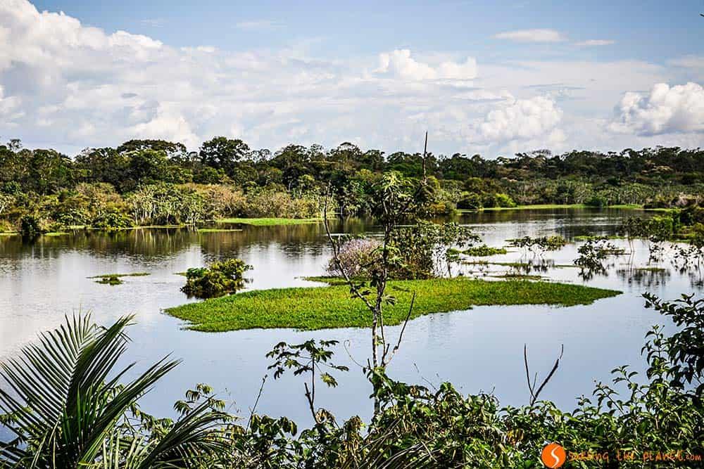 Un lago en la selva Amazónica