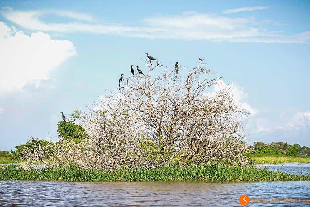 Pájaros en un árbol - viaje al Amazonas