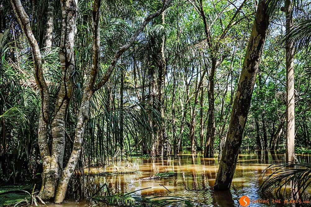 Navegando por la Amazonia inundada