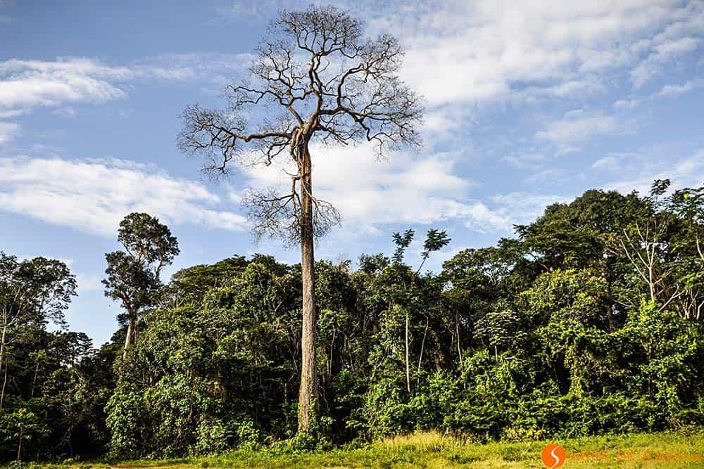 Un árbol árido en la selva Amazónica