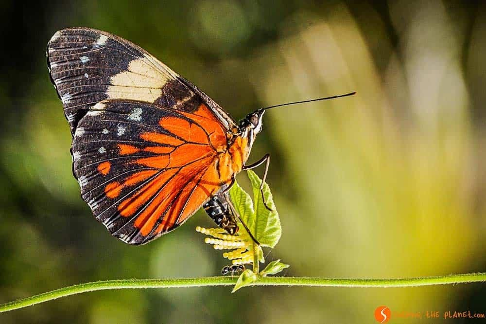 Mariposa en un árbol - Amazonas
