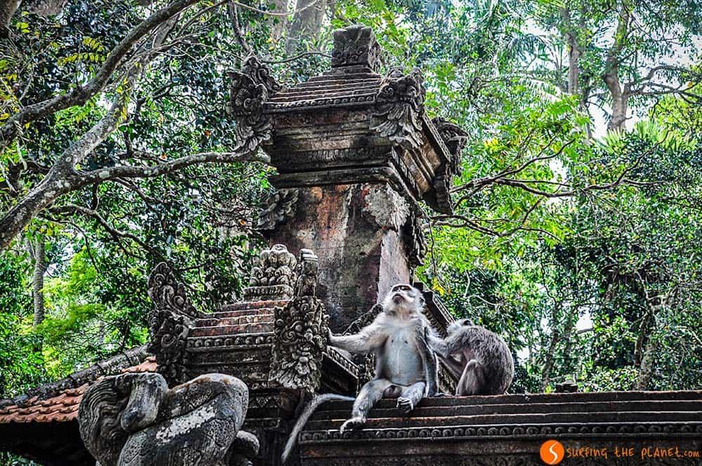 Templos de Bali - Bosque Sagrado de los Monos