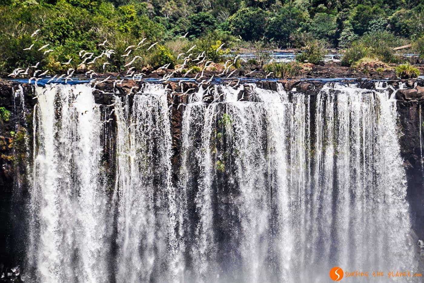 Pájaros volando en las Cataratas del Iguazú