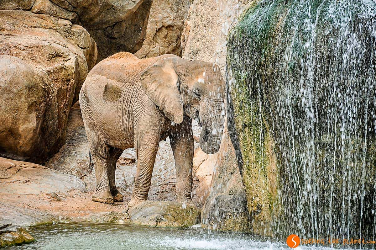 Visit Valencia in 3 days - Bioparc