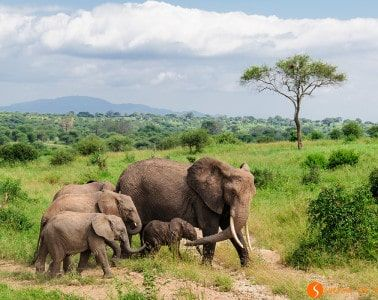 Visiting Tanzania - Elephants in the Tarangire Park