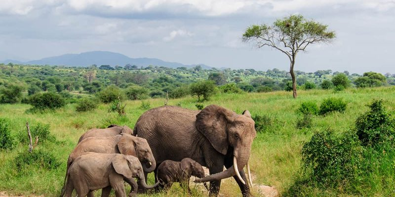 Familia de elefantes, Parque Nacional de Tarangire, Tanzania