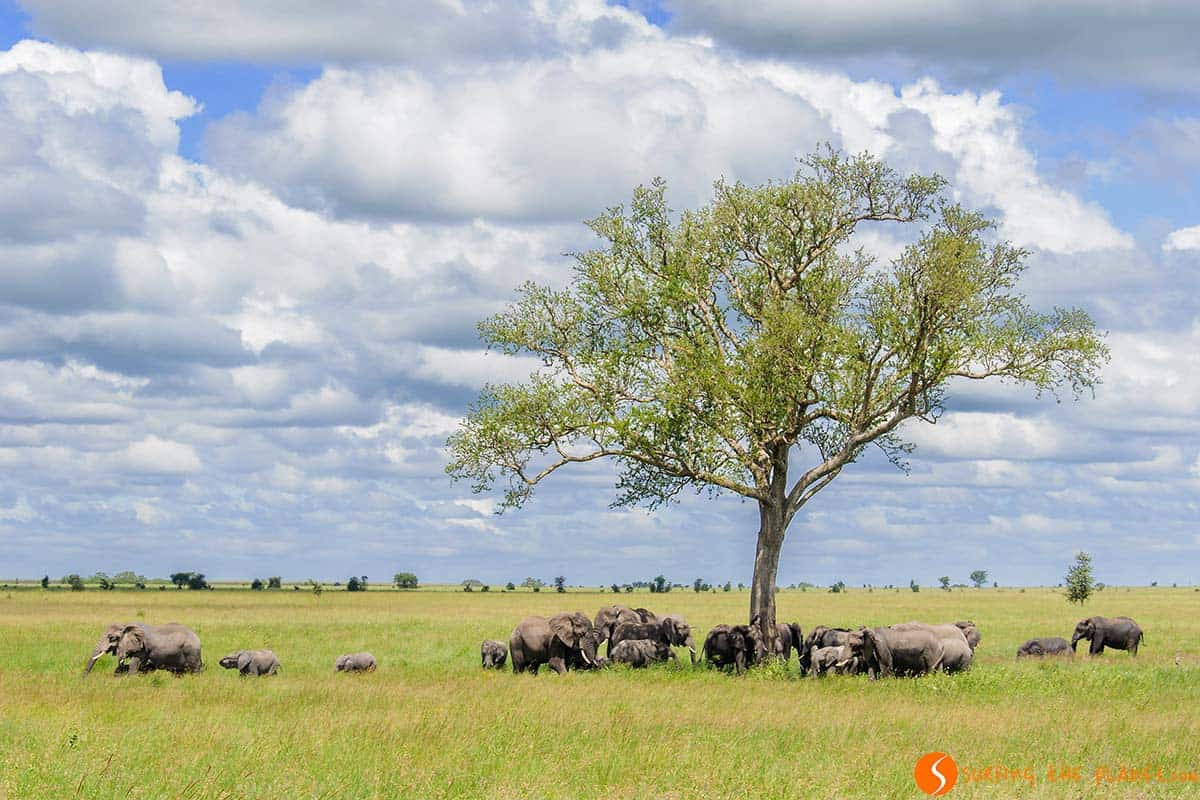 Elephant meeting in Serengeti National Park | Travelling in Tanzania