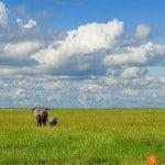 Qué ver y hacer en Tanzania en 15 días - Itinerario y guía de viaje