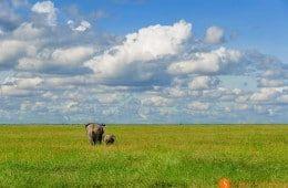 Elephant mother and calf in Serengeti National Park | Visiting Tanzania