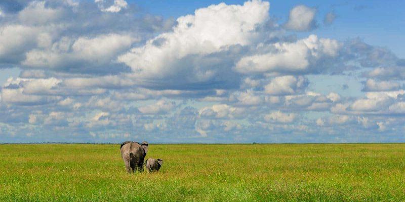 Madre elefante y su cría en el Parque Nacional de Serengeti, Tanzania