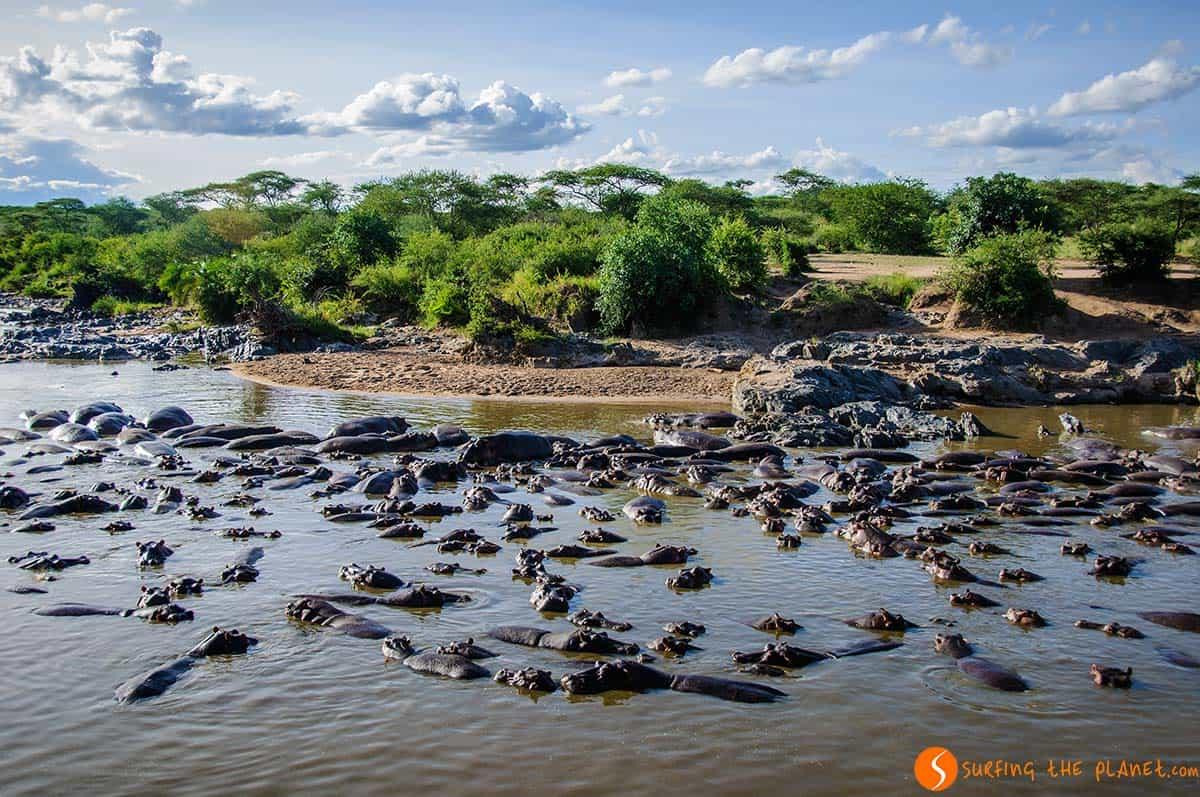 Hipopotamos en el Parque Nacional de Serengeti, Tanzania